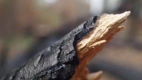 Gebrannter Baum Stockfoto