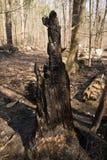 Gebrannter Baum Lizenzfreies Stockfoto