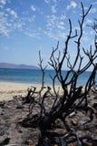 Gebrannter Busch nah an einem Strand stockbilder