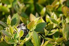 Gebrannter Plastik unter Grünpflanzen lizenzfreies stockbild