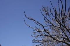 Gebrannter toter Baum auf dunkelblauem Hintergrund Stockfoto