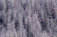 Gebrannter Wald Stockfoto