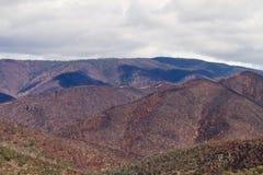 Gebrannter Wald nach Buschfeuer Stockfotografie