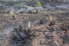 Verheerendes Feuer gebrannte Landschaft Stockbilder