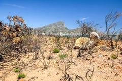 Gebranntes Buschland nach einem Bushfire nahe Pringle-Bucht, gelegen an Weg 44 im Ostteil der falschen Bucht Stockbilder