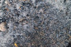 Gebranntes Gras, gebrannter Boden Stockbild