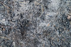 Gebranntes Gras, gebrannter Boden Stockfotografie