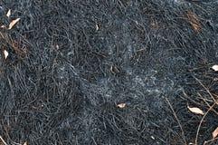 Gebranntes Gras, gebrannter Boden Stockfotos