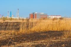 Gebranntes Gras in Vacaresti-Delta von Bukarest Lizenzfreies Stockfoto