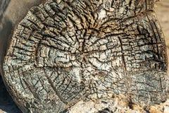 Gebranntes Holz, weiße Kohle, Asche, schwelendes Feuer, das gebrannte hölzerne te Stockfotografie