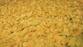 Gebratene Chips rütteln auf dem Fabrikförderer stock video footage