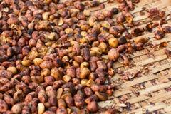 Gebratene Erdnüsse Stockfotografie