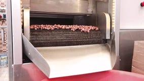 Gebratene Erdnüsse, die aus der Bratmaschine gießen stock video