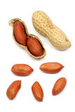 Gebratene Erdnüsse getrennt Lizenzfreie Stockfotografie