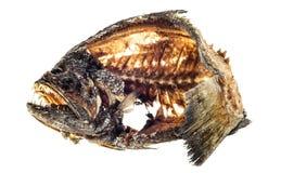 Gebratene Fische Stockfoto