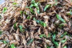 Gebratene Insekten Lizenzfreie Stockbilder
