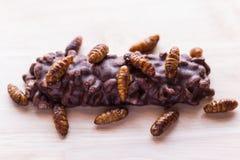 Gebratene Insekten - hölzernes Wurm-, Bambuswurminsekt knusperig und Süßigkeit c lizenzfreie stockfotografie