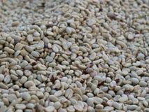 Gebratene Kaffeebohnen Stockbild