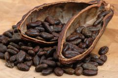 Gebratene Kakao-Bohnen Stockfoto