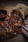 Gebratene Kakaobohnen stockbilder