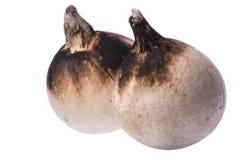 Gebratene Kokosnüsse Stockbild