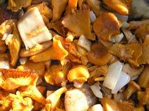 Gebratene Pilze stockfoto