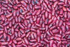Gebratene rote Bohne. Lizenzfreie Stockbilder