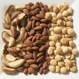 Gebratene und gesalzte Macadamia-Nüsse u. Mandeln und frische Paranüsse Lizenzfreie Stockfotografie