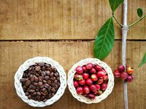 Gebratene und rote Kaffeebohnen stockbild