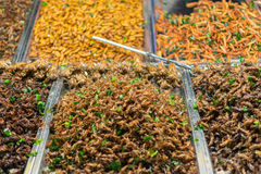 Gebratene verschiedene Arten der Insekten Lizenzfreies Stockbild