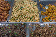 Gebratene verschiedene Arten der Insekten Stockfotos