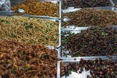 Gebratene verschiedene Arten der Insekten Stockbilder