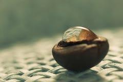 Gebratene, wohlriechende Kaffeebohnen Makro auf blauem Hintergrund Stockfotos