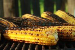 Gebratener Mais Lizenzfreies Stockfoto