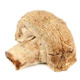 Gebratener weißer Knopf-Pilz (Champignon) lokalisiert auf weißem Hintergrund Lizenzfreie Stockfotos