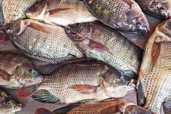 Gebreide vissen Stock Foto