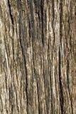 Gebrekkig hout royalty-vrije stock afbeeldingen