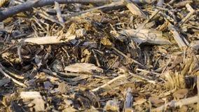 Gebrochen und getrocknet haftet im Frühjahr Wald stock video