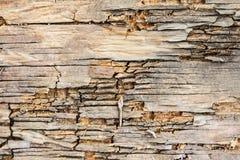 Gebrochene alte Barke auf der Beschaffenheit Stockbild