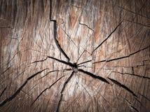 Gebrochene alte Baumbeschaffenheit Stockfotos