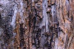 Gebrochene alte Baumstumpfbeschaffenheit Lizenzfreie Stockfotografie