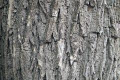 Gebrochene Barke eines alten Baums Lizenzfreie Stockfotos