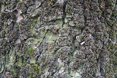 Gebrochene Barke eines alten Baums Lizenzfreie Stockbilder