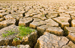 Gebrochene Erde mit Gras Stockfoto