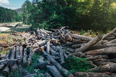 Gebrochene gefallene alte Baum-Lüge im Sommer Forest On River Background, Ökologie-Abholzungs-Konzept Lizenzfreie Stockfotos