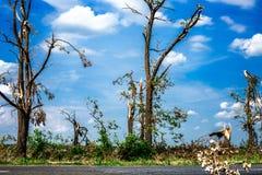 Gebrochene gefallene Bäume Defekte Bäume in der Zeit nach einem Hurrikan Region Ukraine, Cherkassy, Sommer 2017 Stockbild