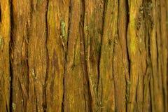Gebrochene gelbe Barke auf einem Baum Stockbilder