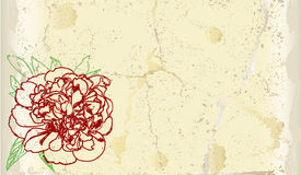 Gebrochene Karte der Weinlese mit Hand gezeichneter Pfingstrose Lizenzfreies Stockfoto