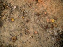 Gebrochene Oberfläche des trockenen Bodens mit trockenen Blättern Stockbilder