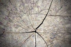 Gebrochener Abschnitt des Baumstammes Stockbilder